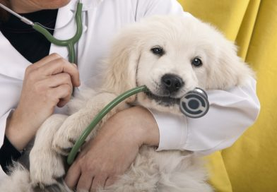Is Pet Insurance Worth It? A Few Things to Consider